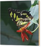Blooms And Butterfly7c Wood Print