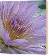 Bloom's Blush Wood Print