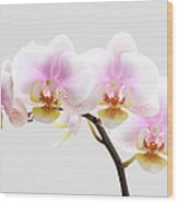 Blooms On White Wood Print by Juergen Roth