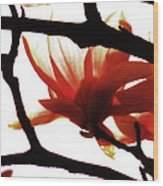 Blossom Abstract Wood Print