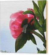 Blossom Bottom Wood Print