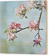 Blossom Branch Wood Print by Kim Hojnacki