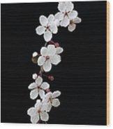 Blossom On Black Wood Print