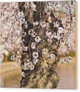 Blossom Ponytails Wood Print
