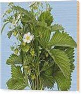 Blossom Strawberries On Cyan Wood Print