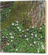 Blossom Windflowers Wood Print