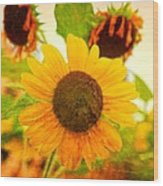 Blossoming Sunflower Beauty Wood Print
