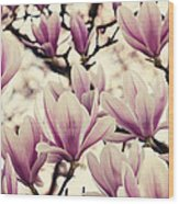 Blossoming Of Magnolia Flowers In Spring Time Wood Print