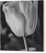 Blossoming Tulip Wood Print