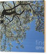 Blossoming White Magnolia Tree Against Blue Sky Wood Print