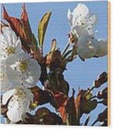 Blossoms 2 Wood Print