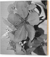 Blossoms 2013 Monochrome Wood Print
