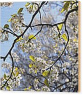 Blossoms And Leaves Wood Print