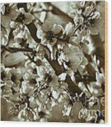 Blossoms Wood Print by Frank Tschakert