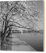 Blossoms In Bw Wood Print