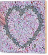 Blossoms Of Love - Cherry Blossoms 2013 - 071 Wood Print