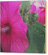 Blosssoms And Buds Hibiscus  Wood Print