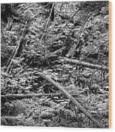 Blow Down Glacier National Park Bw Wood Print