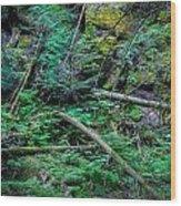 Blow Down Glacier National Park Painted Wood Print
