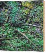 Blow Down Glacier National Park  Wood Print