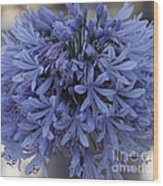 Blue Agapanthus Wood Print