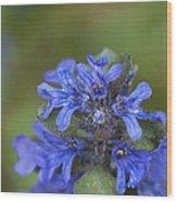 Blue Ajuga Wood Print