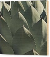 Blue Aloe Wood Print by Ellen Henneke