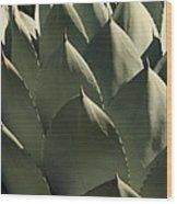 Blue Aloe Wood Print