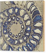 Blue Ammonite Wood Print