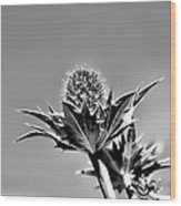 Blue And Green Bw Green Plant In Front Of A Blue Sky Wood Print