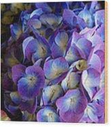 Blue And Purple Hydrangeas Wood Print