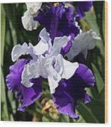 Blue And White Iris Wood Print