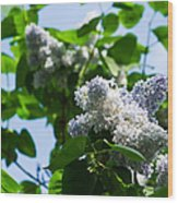 Blue And White Lilacs Wood Print