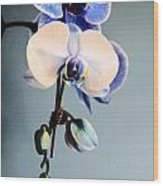Blue And White Orchids Wood Print