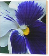 Blue And White Pansy Wood Print