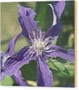 Blue Angel Clematis Close   # Wood Print