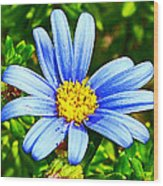 Blue Aster In Park Sierra Near Coarsegold-california   Wood Print