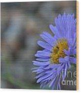 Blue Aster Wood Print