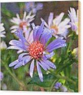Blue Asters 3 Wood Print