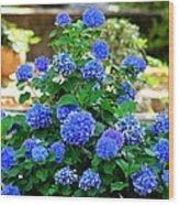 Blue At Bonaventure Wood Print