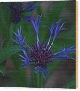 Blue Bachelor Button Wood Print