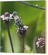 Blue Bee 2 Wood Print