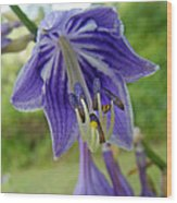 Blue Bell Flower Wood Print
