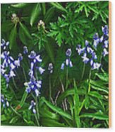Blue Bells Wood Print