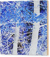 Blue Birch Trees Wood Print