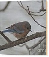 Blue Bird 201301 Wood Print