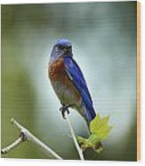 Blue Bird Halo Wood Print