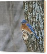 Blue Bird In Winter Wood Print
