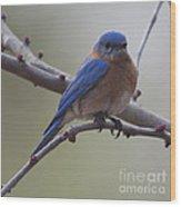 Blue Bird Of Happiness Wood Print