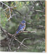 Blue Bird Perched Wood Print